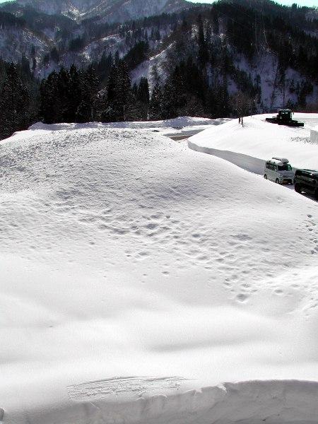 圃場雪0.JPG