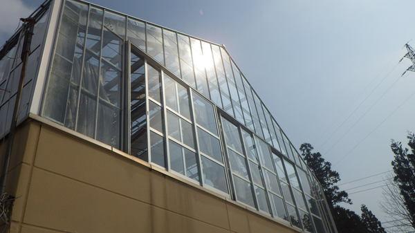 温室150416-1.JPGのサムネイル画像