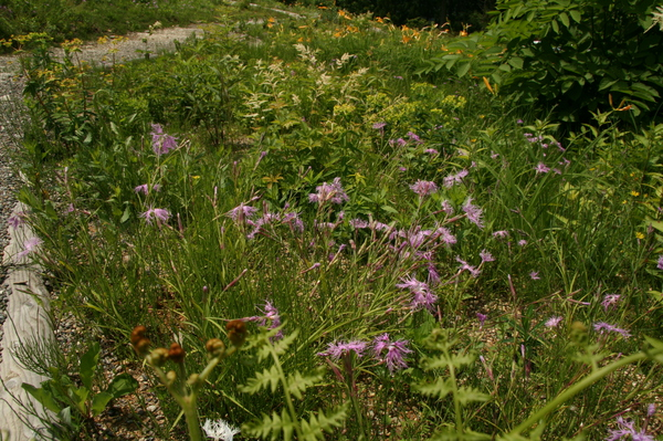 植物園150624- (10).JPG