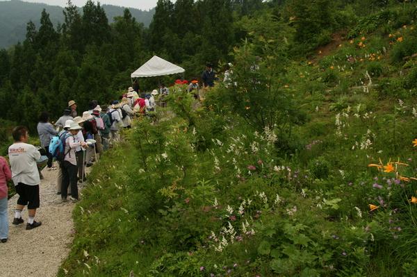 植物園15日目150704- (6).JPG