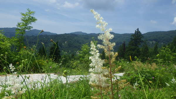植物園21日目150712- (6).JPG