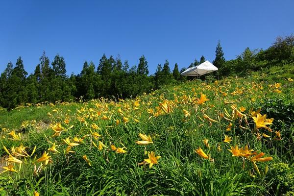 植物園4日目20160610 (17).jpg