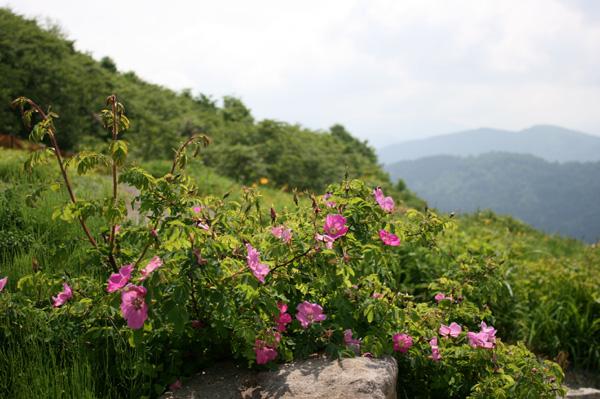 garden607.jpg